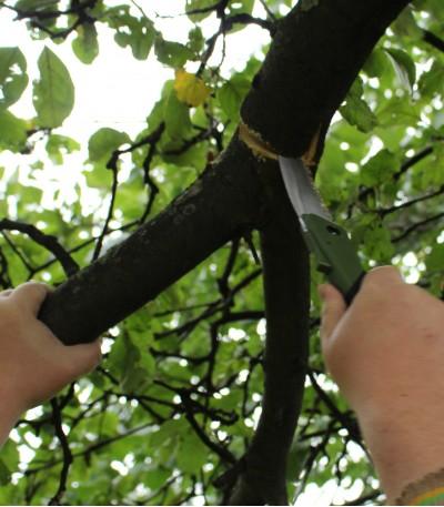 řezání větve o průměru 8 cm